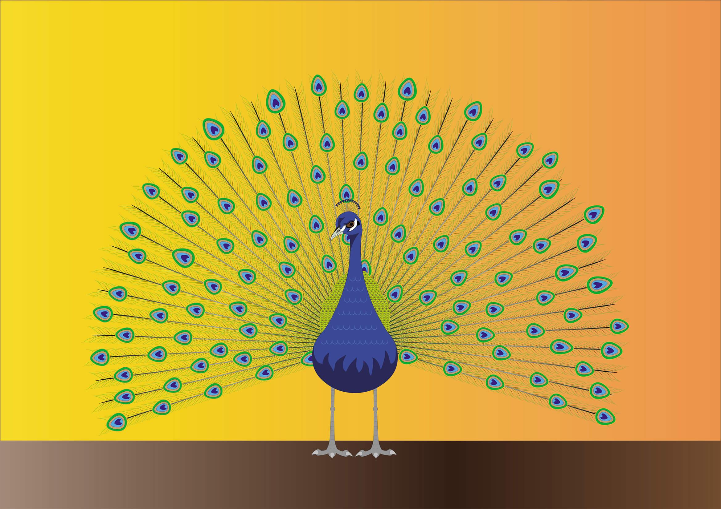 Dessin vectoriel de paon réalisé sur Illustrator