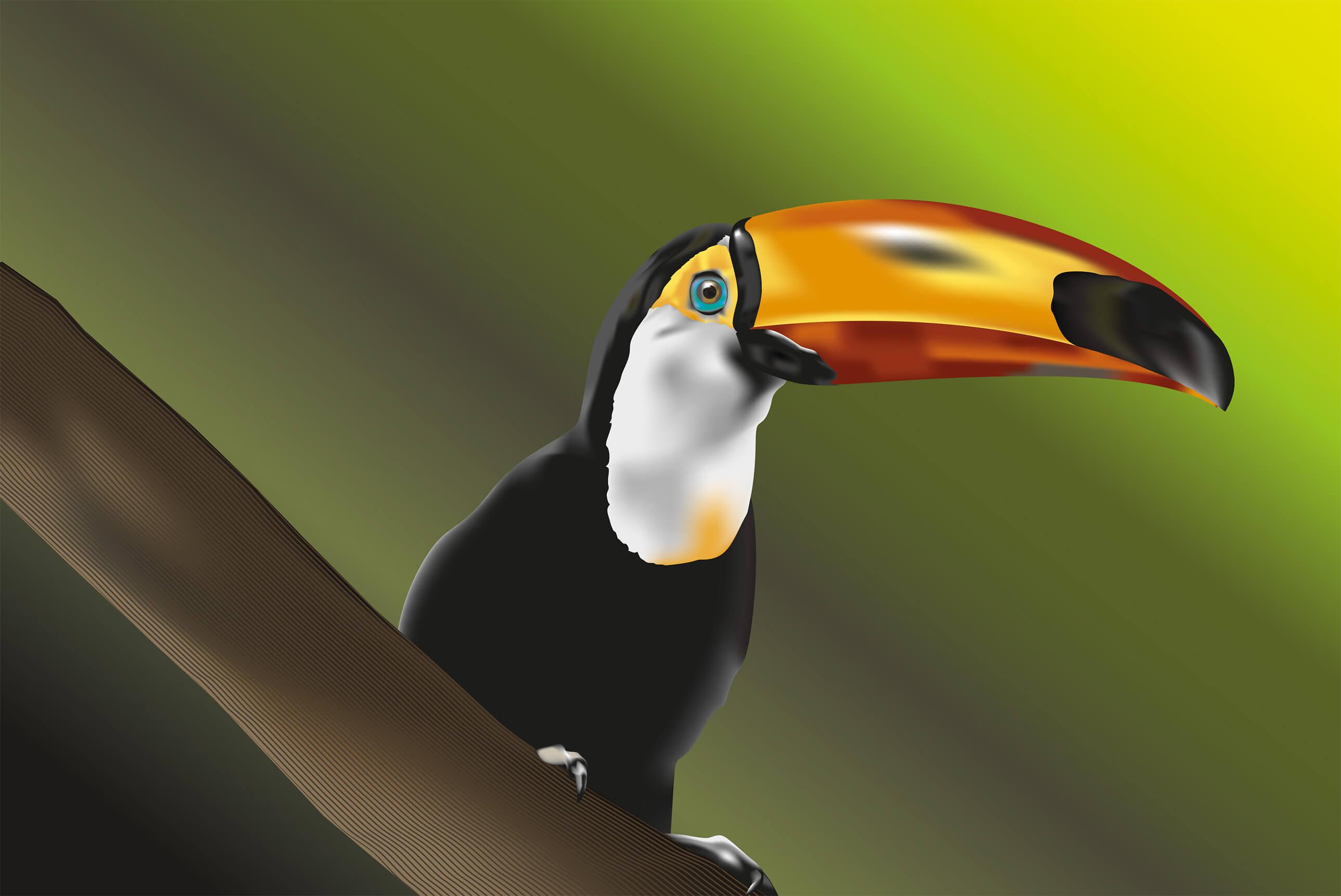 Dessin vectoriel de toucan réalisé sur Illustrator